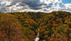 Trees with colorful autumn leaves on hillsides